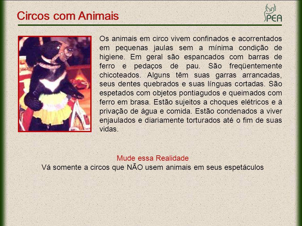 Vá somente a circos que NÃO usem animais em seus espetáculos
