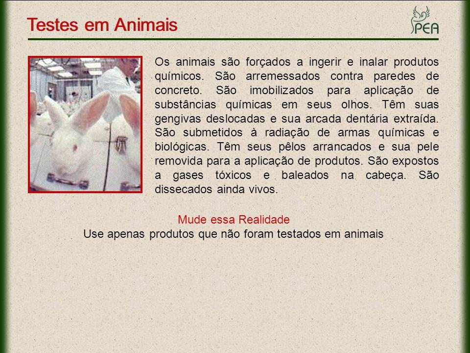 Use apenas produtos que não foram testados em animais