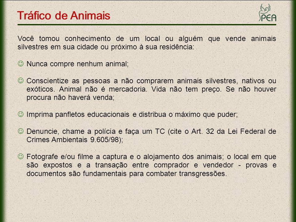Tráfico de Animais Você tomou conhecimento de um local ou alguém que vende animais silvestres em sua cidade ou próximo à sua residência: