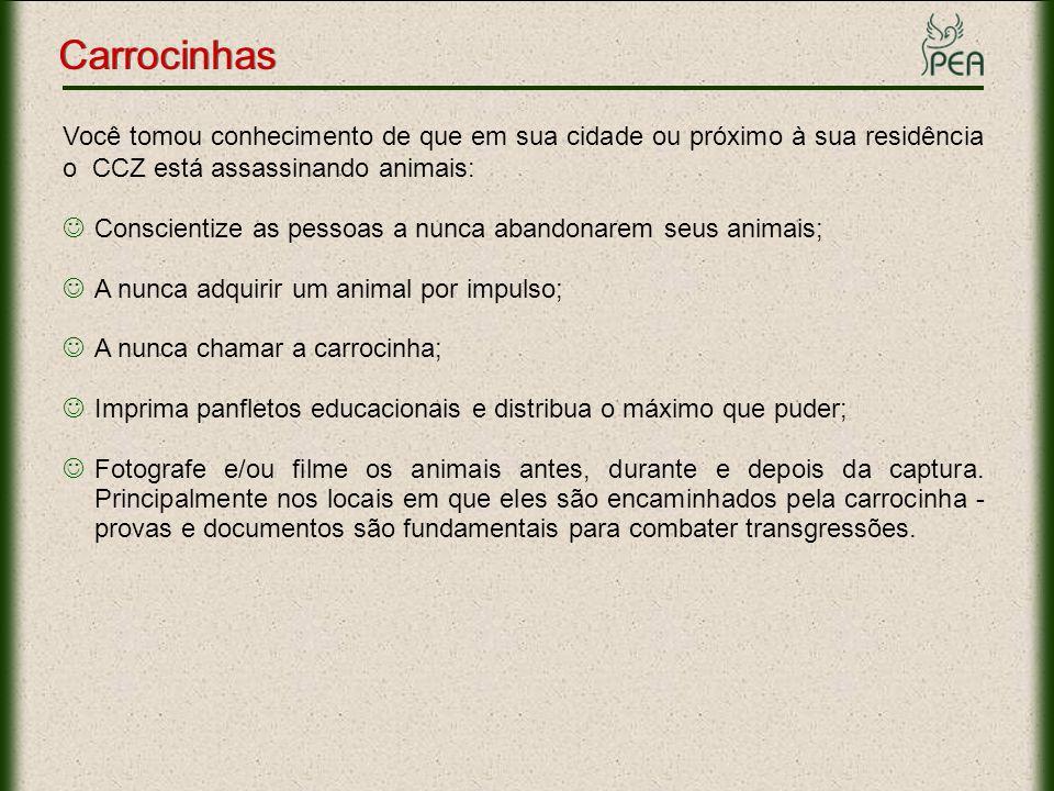 Carrocinhas Você tomou conhecimento de que em sua cidade ou próximo à sua residência o CCZ está assassinando animais: