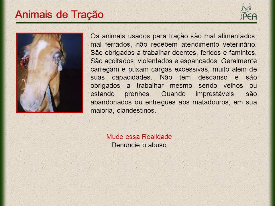 Animais de Tração