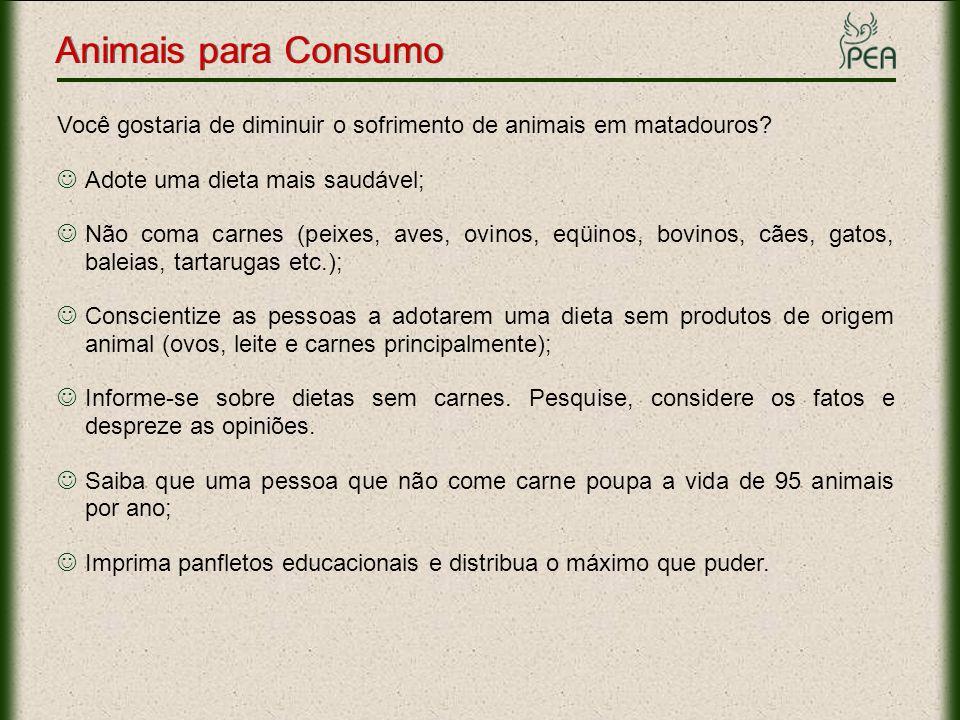 Animais para Consumo Você gostaria de diminuir o sofrimento de animais em matadouros Adote uma dieta mais saudável;