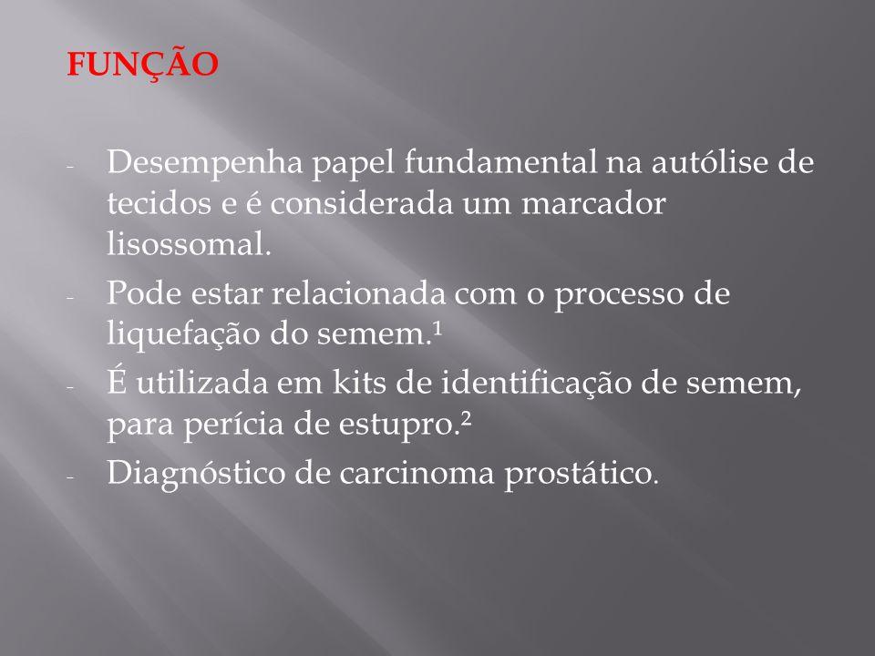 FUNÇÃO Desempenha papel fundamental na autólise de tecidos e é considerada um marcador lisossomal.