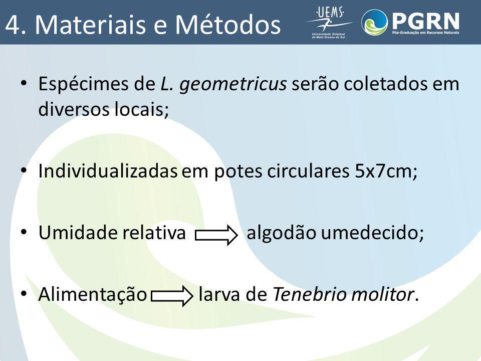 4. Materiais e Métodos Espécimes de L. geometricus serão coletados em diversos locais; Individualizadas em potes circulares 5x7cm;