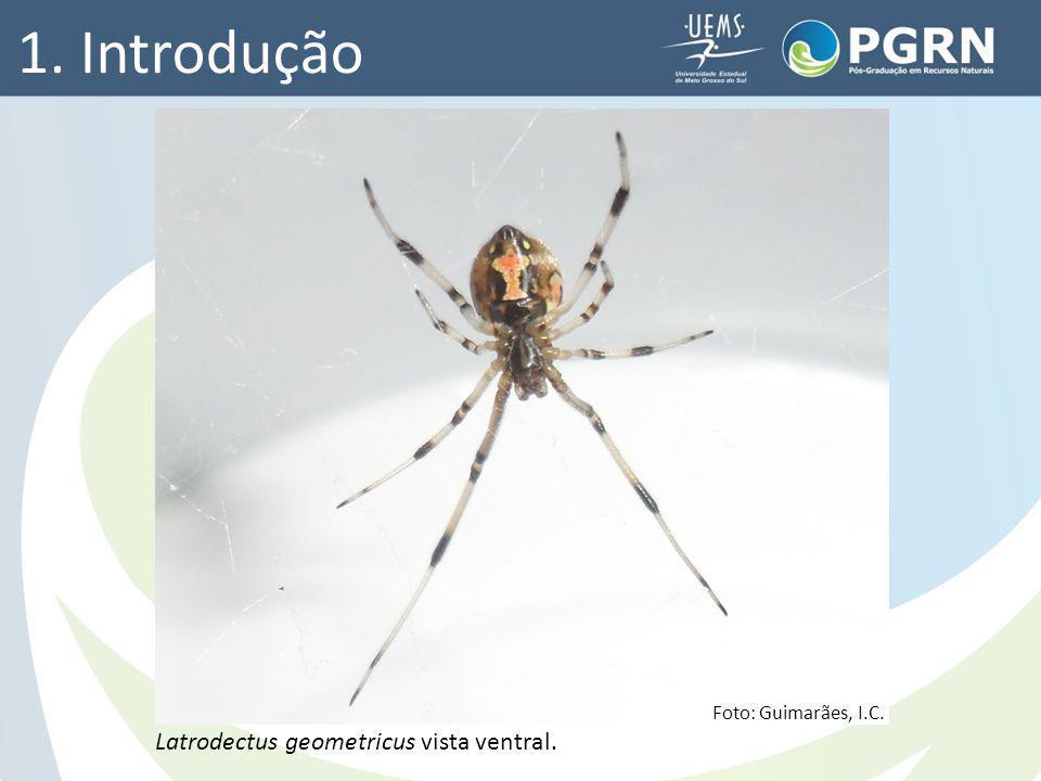 1. Introdução Latrodectus geometricus vista ventral.