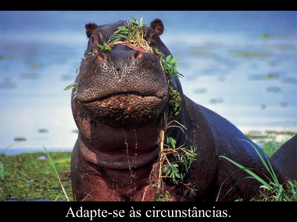 Adapte-se às circunstâncias.