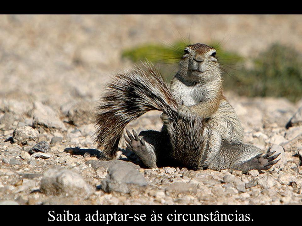 Saiba adaptar-se às circunstâncias.