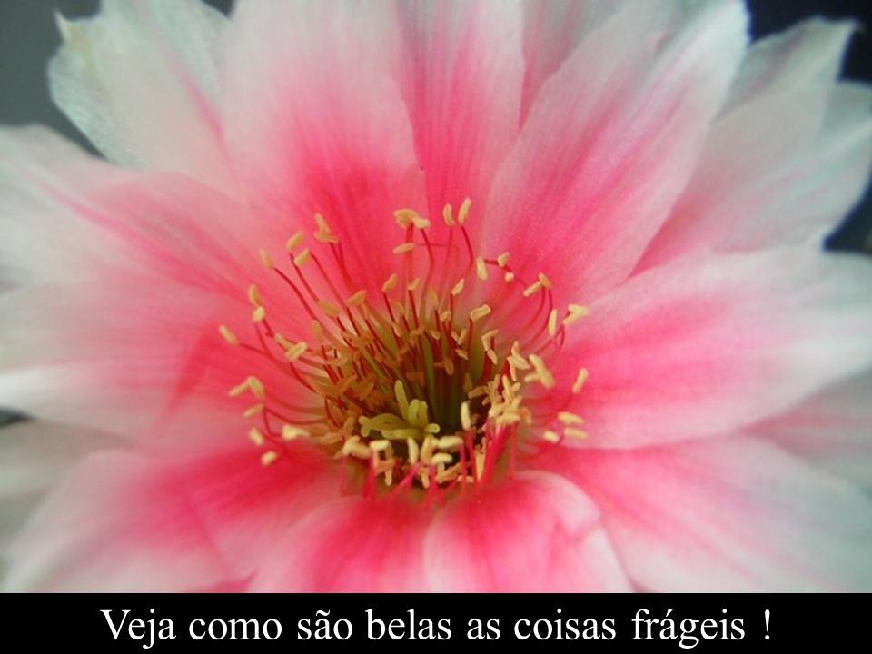 Veja como são belas as coisas frágeis !