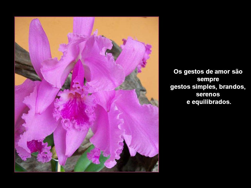 Os gestos de amor são sempre gestos simples, brandos, serenos