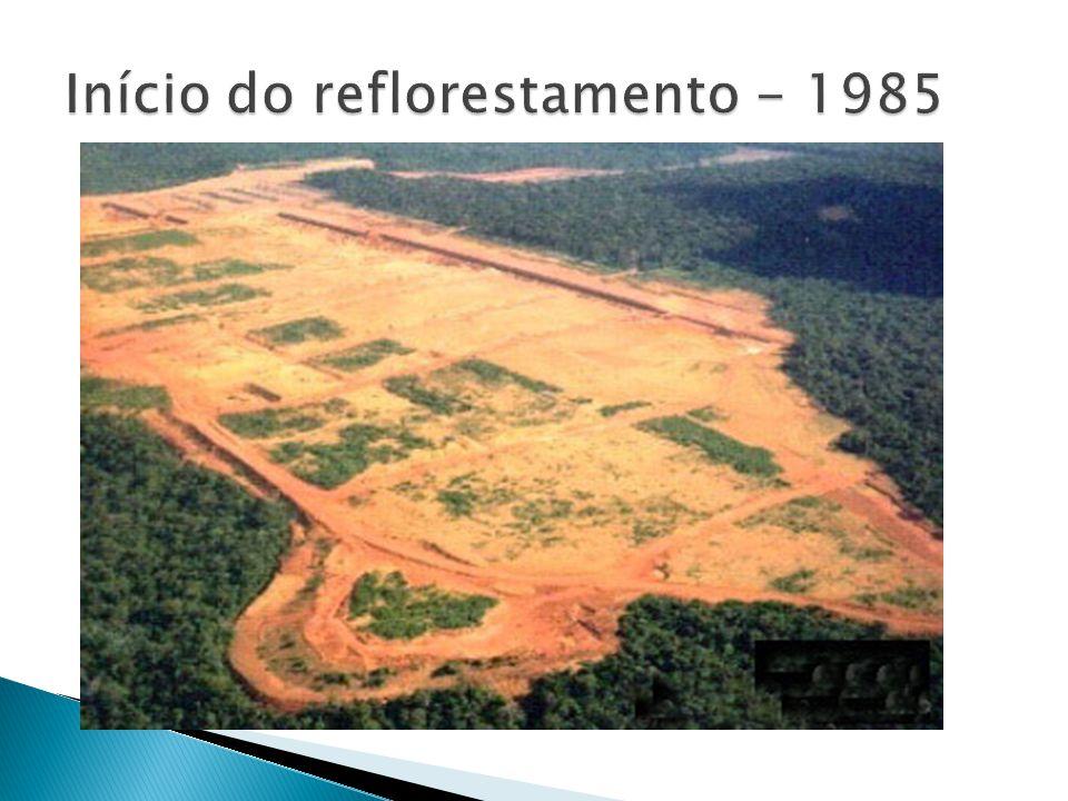 Início do reflorestamento - 1985