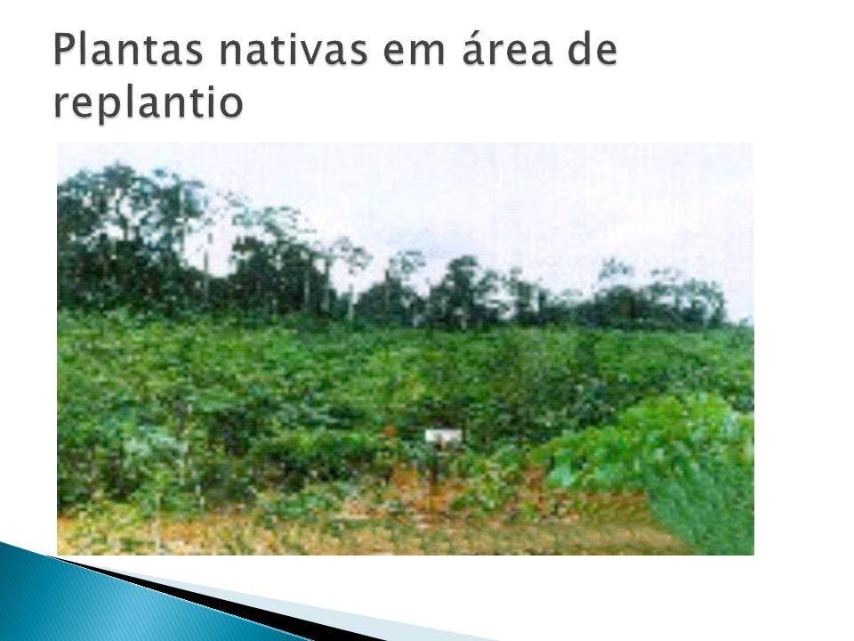 Plantas nativas em área de replantio