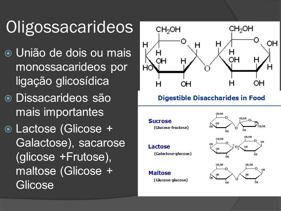 Oligossacarideos União de dois ou mais monossacarideos por ligação glicosídica. Dissacarideos são mais importantes.
