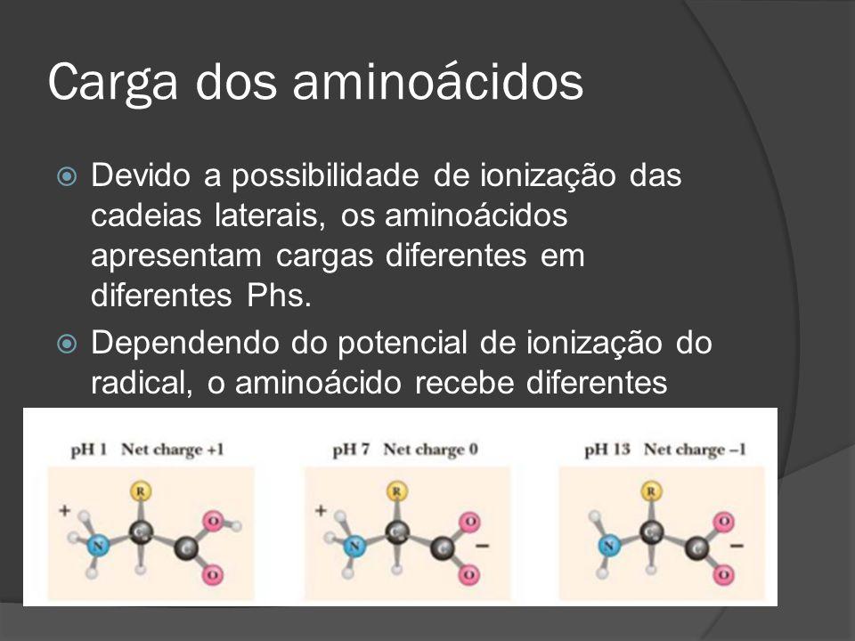 Carga dos aminoácidos Devido a possibilidade de ionização das cadeias laterais, os aminoácidos apresentam cargas diferentes em diferentes Phs.