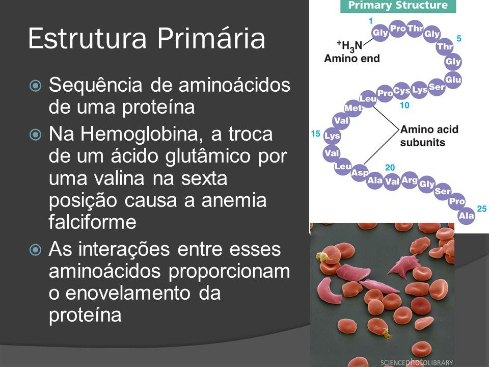 Estrutura Primária Sequência de aminoácidos de uma proteína