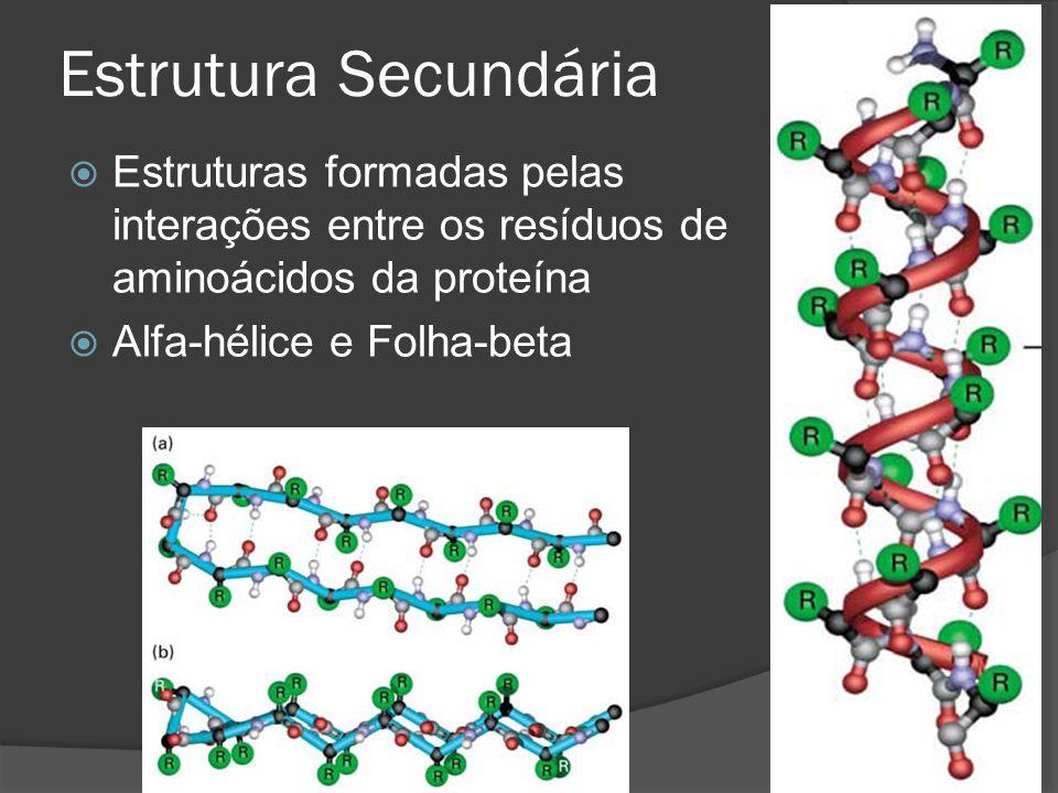 Estrutura Secundária Estruturas formadas pelas interações entre os resíduos de aminoácidos da proteína.