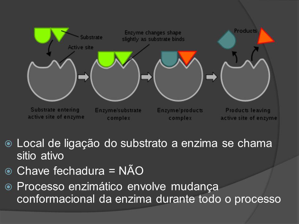 Local de ligação do substrato a enzima se chama sitio ativo
