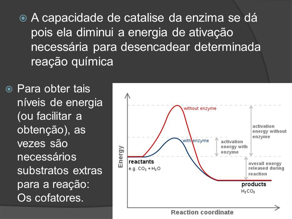 A capacidade de catalise da enzima se dá pois ela diminui a energia de ativação necessária para desencadear determinada reação química