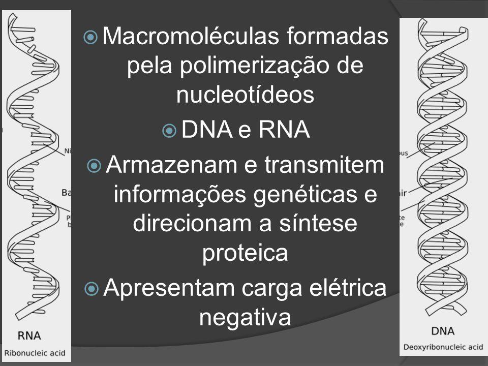 Macromoléculas formadas pela polimerização de nucleotídeos