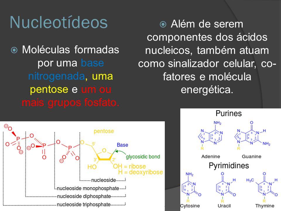 Nucleotídeos Além de serem componentes dos ácidos nucleicos, também atuam como sinalizador celular, co-fatores e molécula energética.