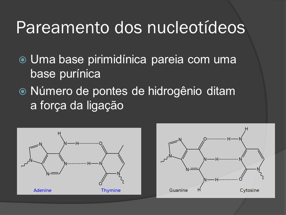 Pareamento dos nucleotídeos