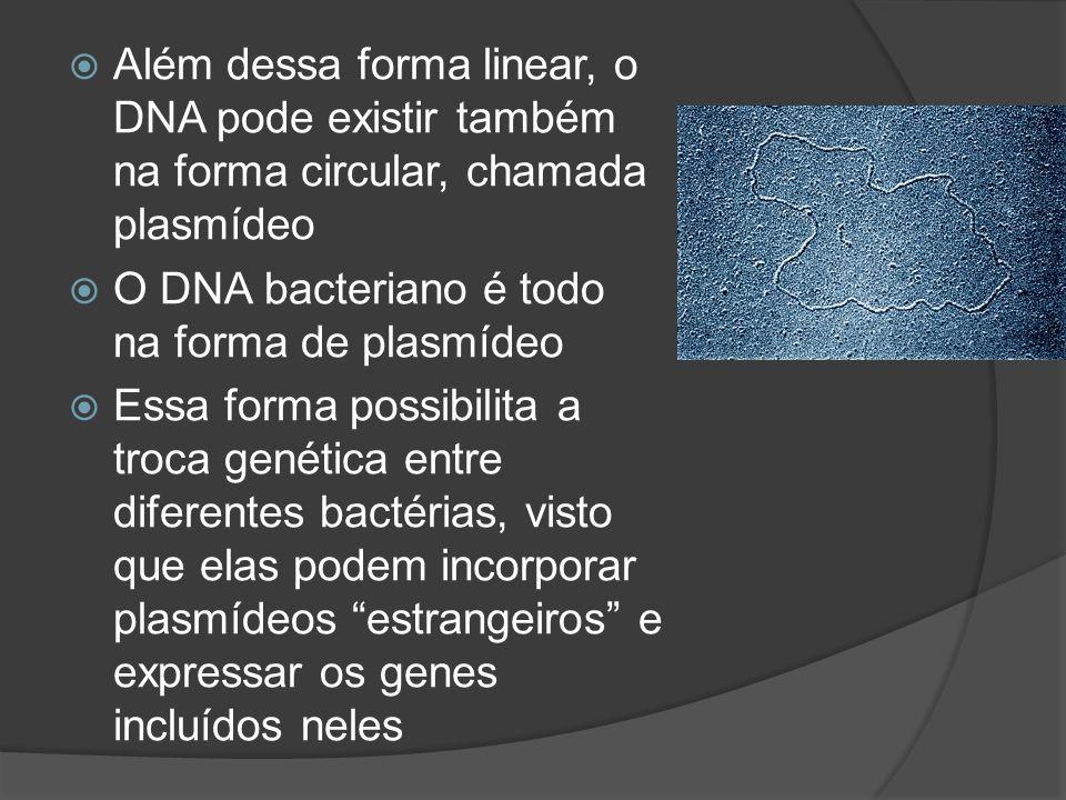 Além dessa forma linear, o DNA pode existir também na forma circular, chamada plasmídeo