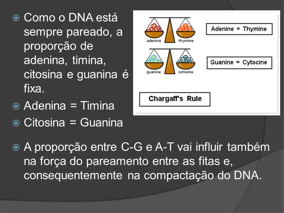 Como o DNA está sempre pareado, a proporção de adenina, timina, citosina e guanina é fixa.