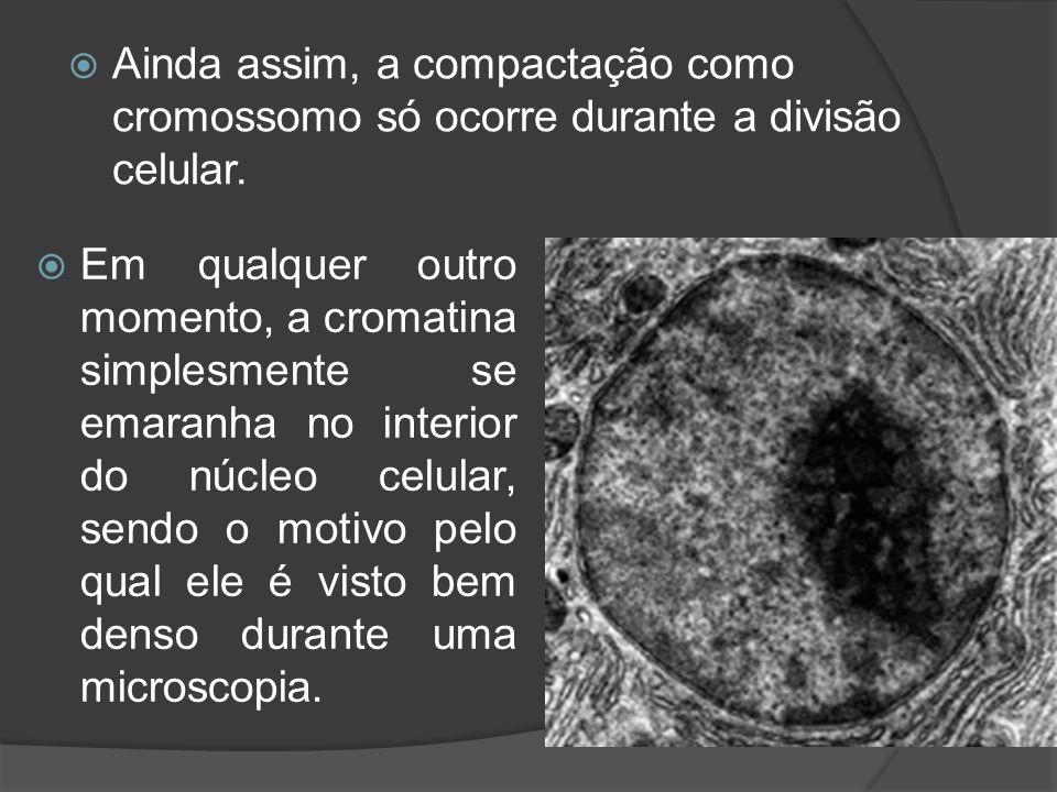 Ainda assim, a compactação como cromossomo só ocorre durante a divisão celular.