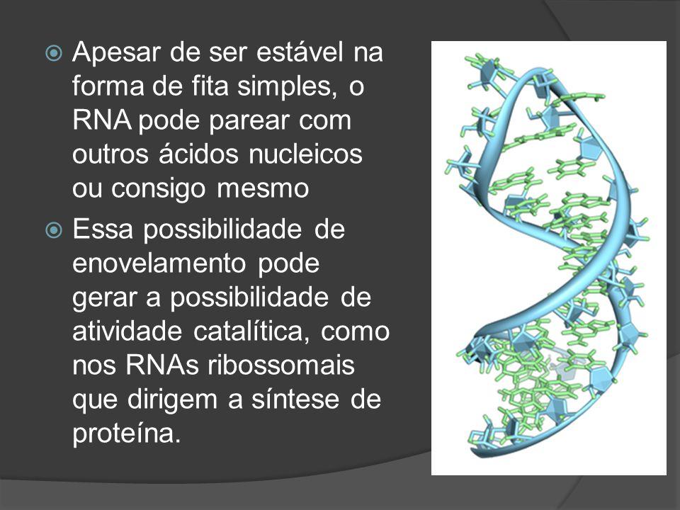 Apesar de ser estável na forma de fita simples, o RNA pode parear com outros ácidos nucleicos ou consigo mesmo