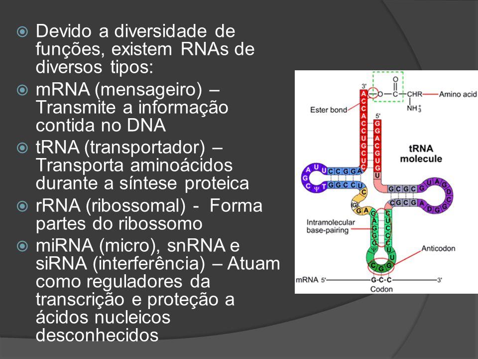 Devido a diversidade de funções, existem RNAs de diversos tipos: