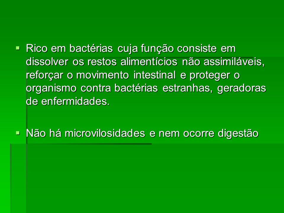 Rico em bactérias cuja função consiste em dissolver os restos alimentícios não assimiláveis, reforçar o movimento intestinal e proteger o organismo contra bactérias estranhas, geradoras de enfermidades.