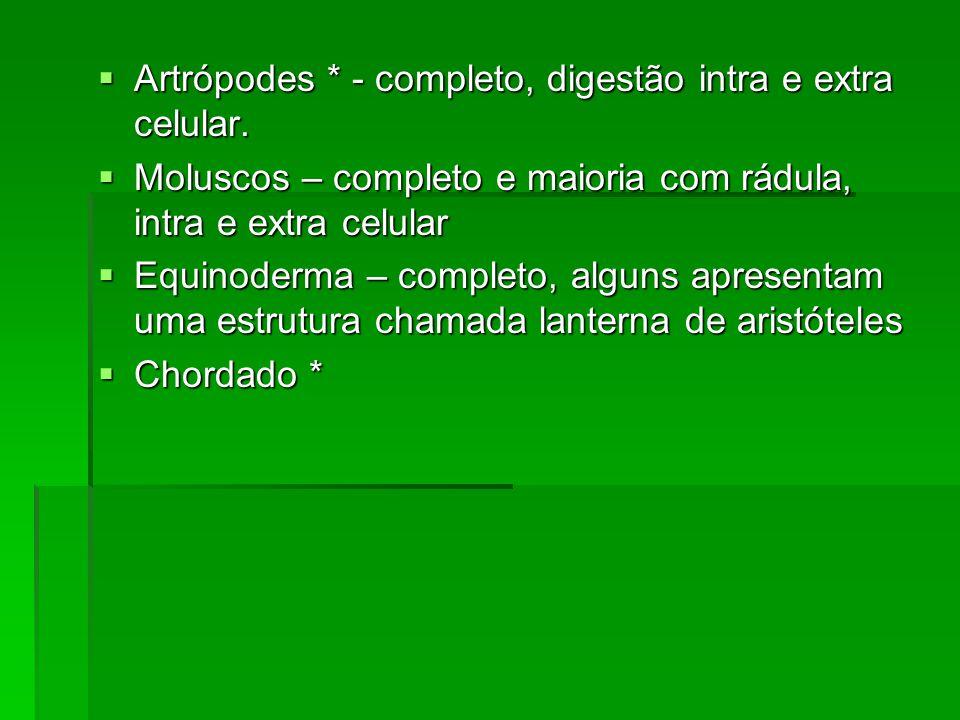 Artrópodes * - completo, digestão intra e extra celular.