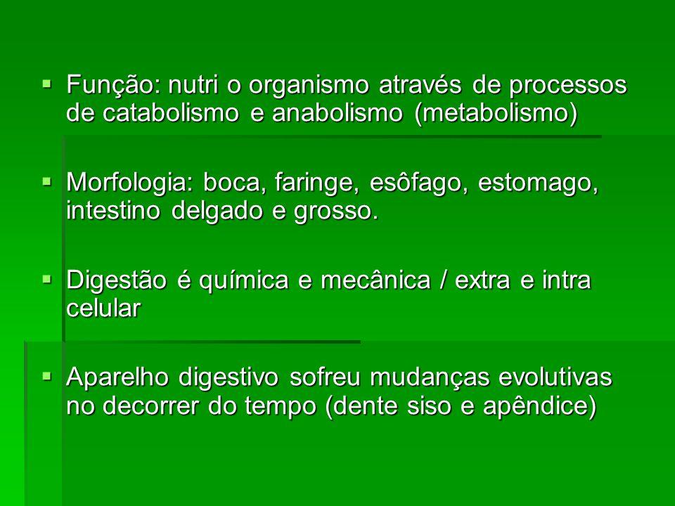 Função: nutri o organismo através de processos de catabolismo e anabolismo (metabolismo)