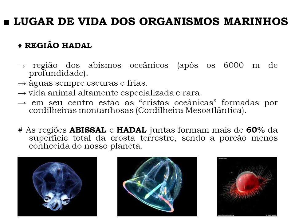 ■ LUGAR DE VIDA DOS ORGANISMOS MARINHOS