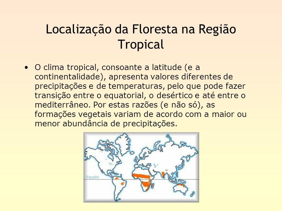 Localização da Floresta na Região Tropical