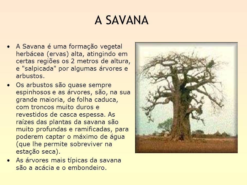 A SAVANA
