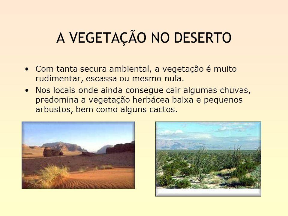 A VEGETAÇÃO NO DESERTO Com tanta secura ambiental, a vegetação é muito rudimentar, escassa ou mesmo nula.