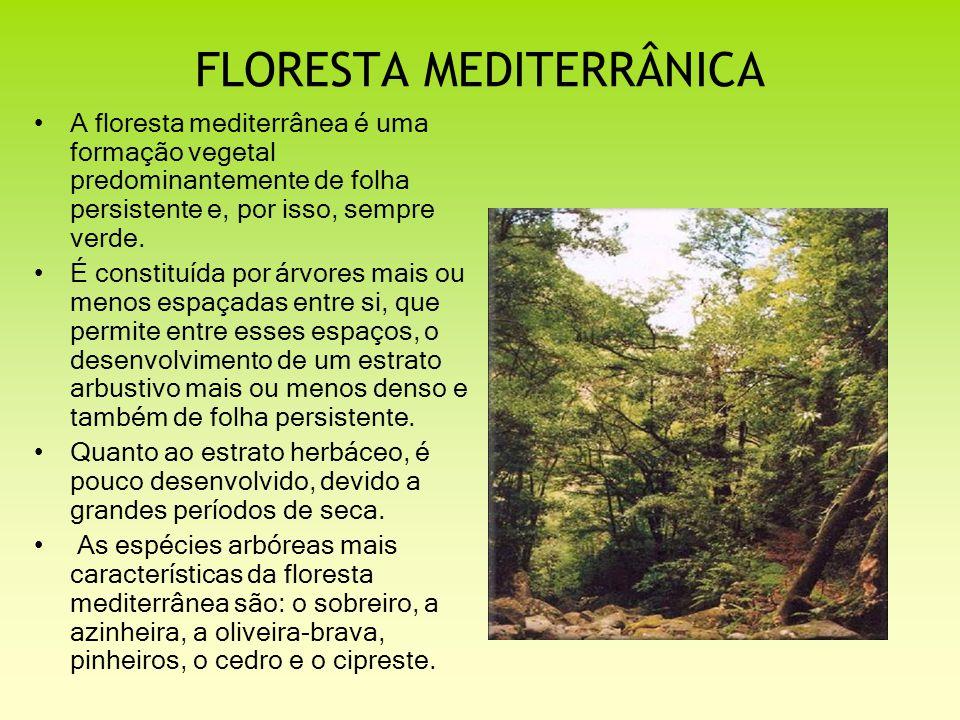 FLORESTA MEDITERRÂNICA