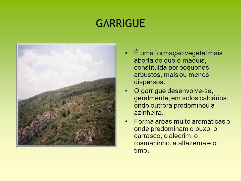 GARRIGUE É uma formação vegetal mais aberta do que o maquis, constituída por pequenos arbustos, mais ou menos dispersos.