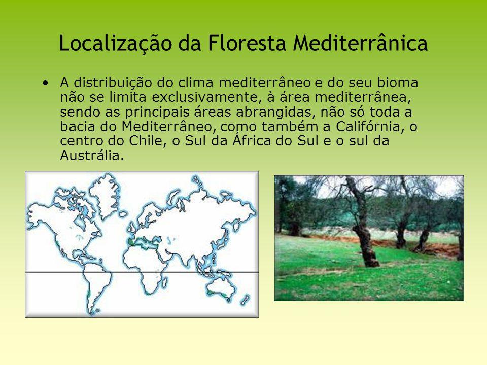 Localização da Floresta Mediterrânica