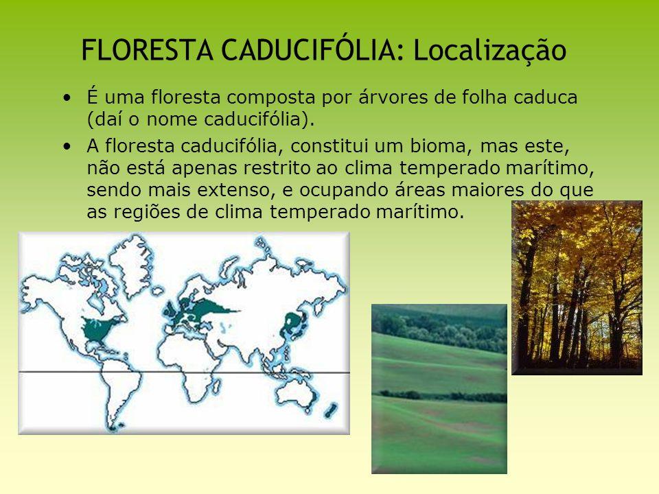 FLORESTA CADUCIFÓLIA: Localização