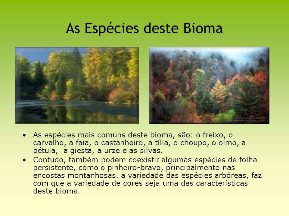As Espécies deste Bioma