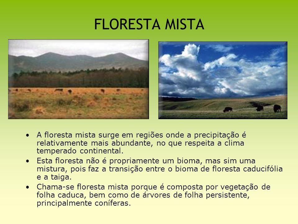 FLORESTA MISTA A floresta mista surge em regiões onde a precipitação é relativamente mais abundante, no que respeita a clima temperado continental.