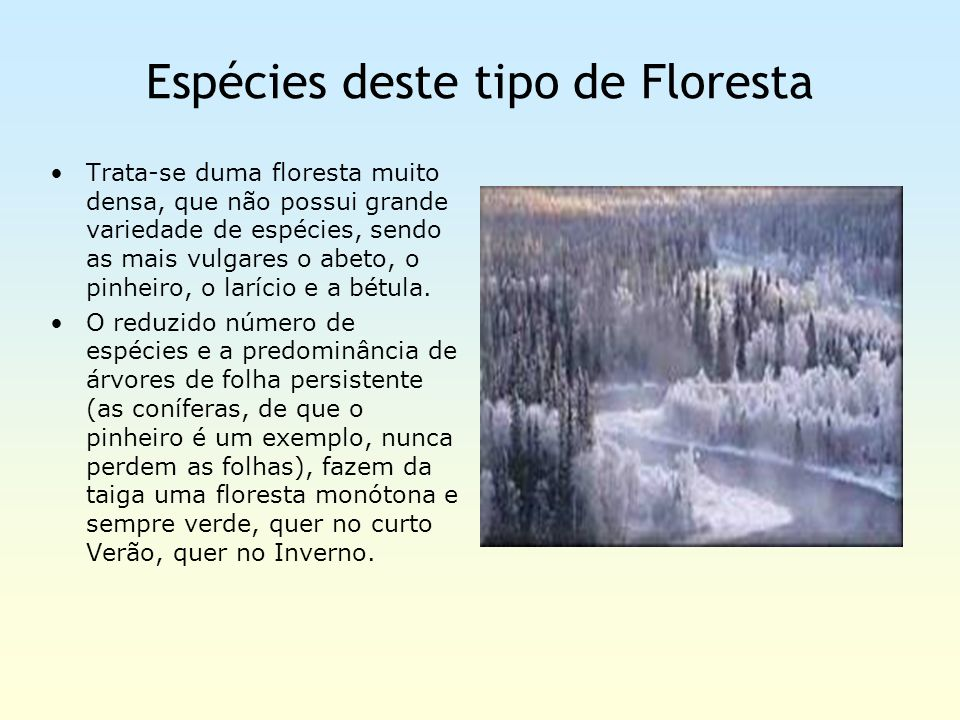 Espécies deste tipo de Floresta