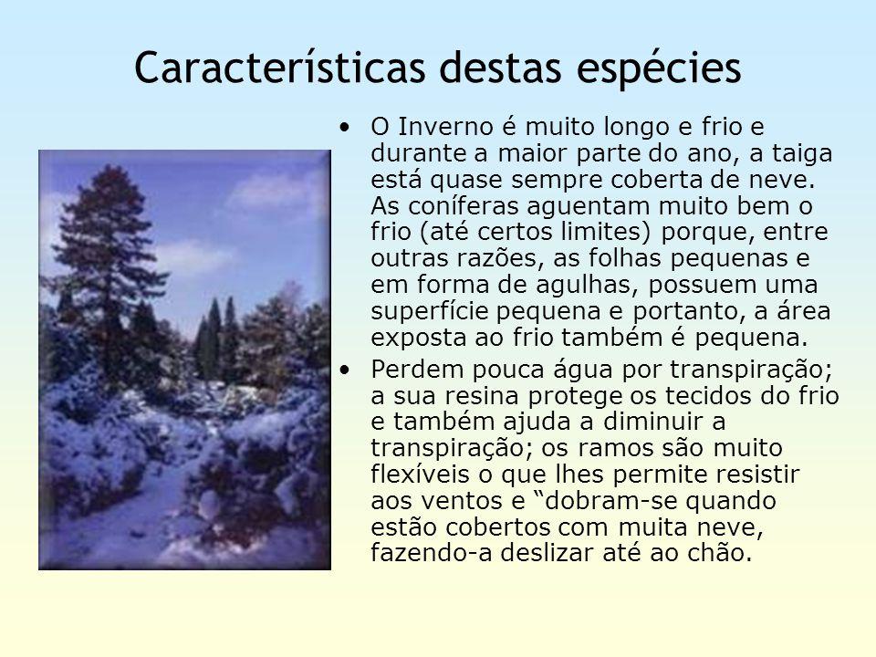 Características destas espécies