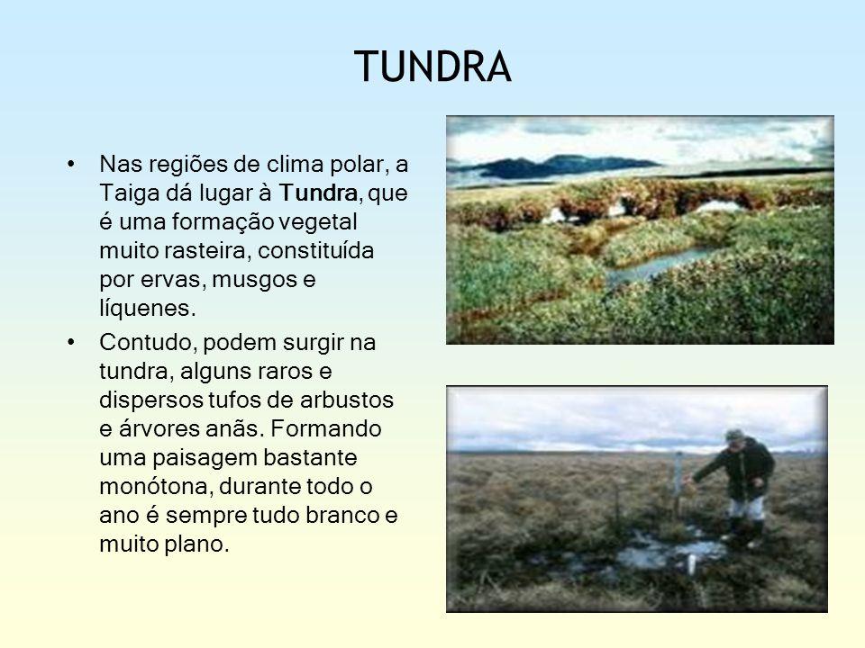 TUNDRA Nas regiões de clima polar, a Taiga dá lugar à Tundra, que é uma formação vegetal muito rasteira, constituída por ervas, musgos e líquenes.