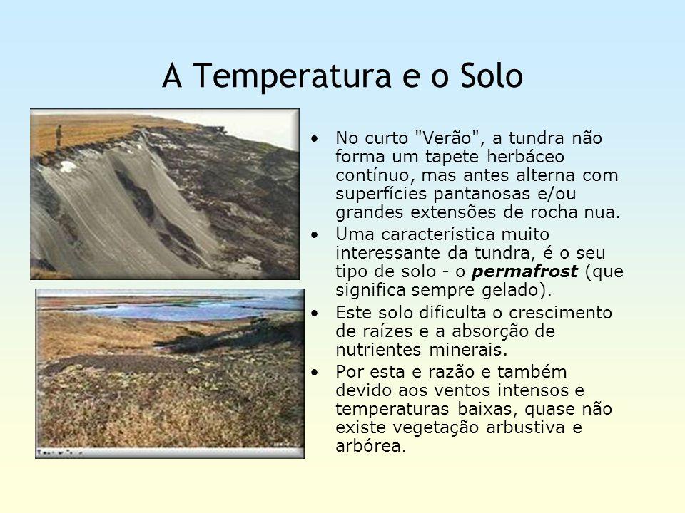 A Temperatura e o Solo