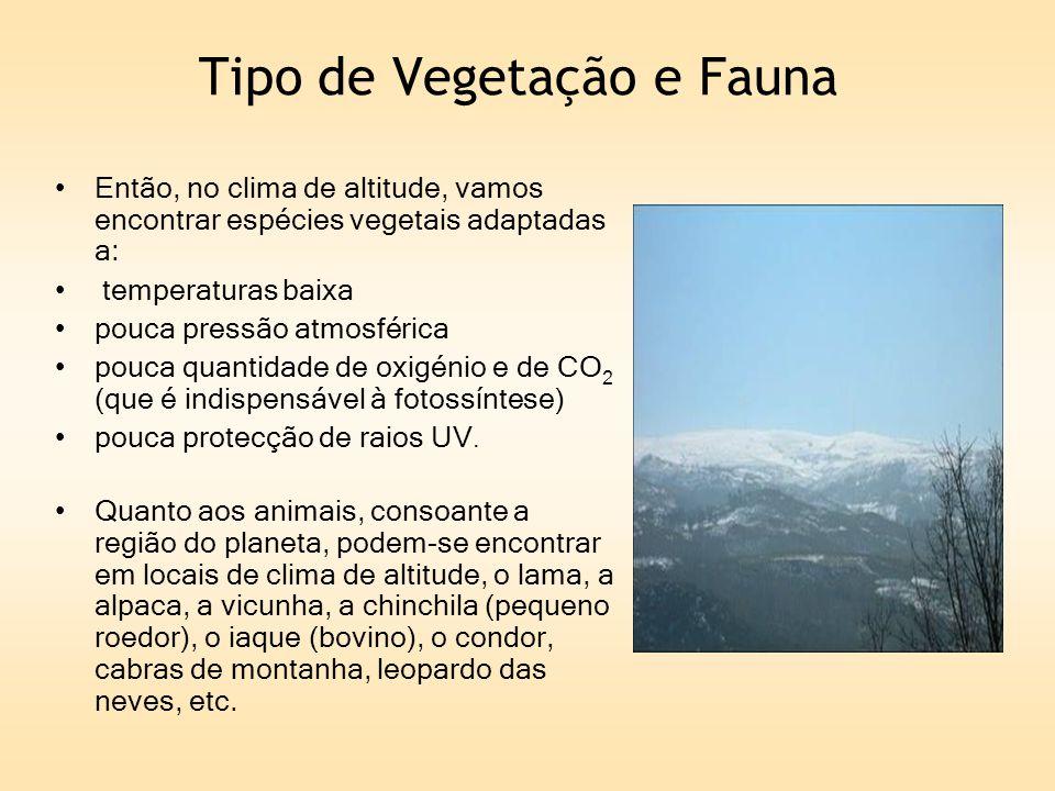 Tipo de Vegetação e Fauna