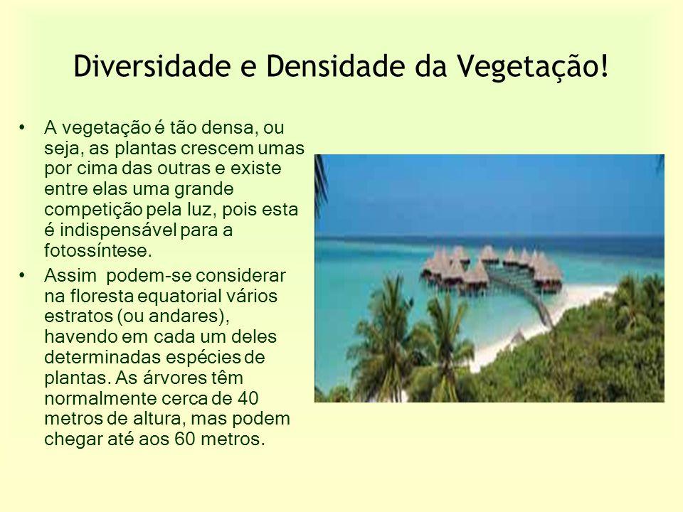 Diversidade e Densidade da Vegetação!