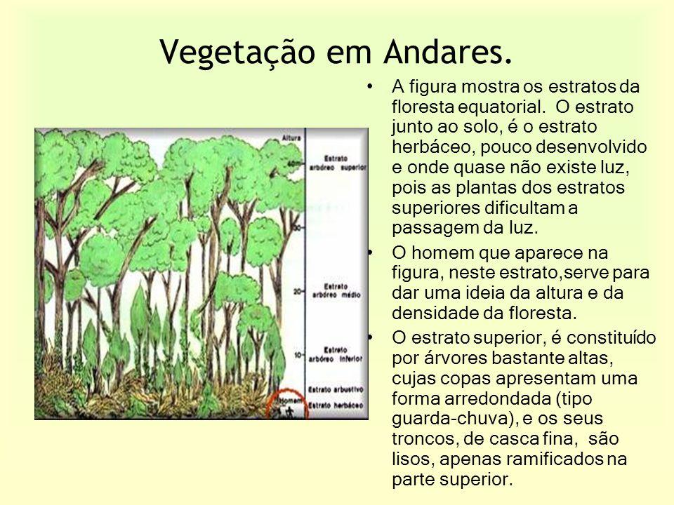 Vegetação em Andares.