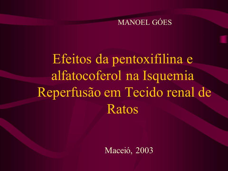 Efeitos da pentoxifilina e alfatocoferol na Isquemia Reperfusão em Tecido renal de Ratos